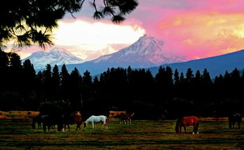 Horses at Black Butte Ranch.