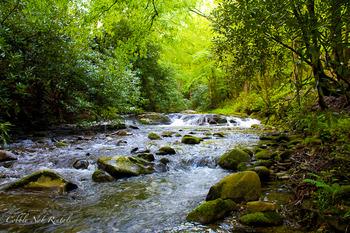 Flowing river at Cobbly Nob Rentals.