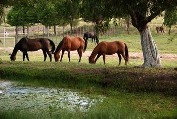 Horses at Cibolo Creek Ranch.