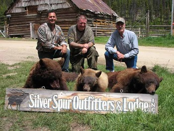 Bear hunting at Silver Spur Outfitters.