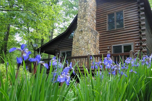 sundance cabin rentals blue ridge ga resort reviews