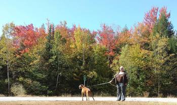 Pet friendly rentals at Loon Reservation Service.