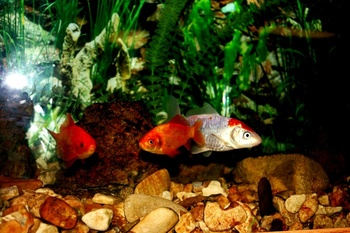 Fish at River Ridge Inn.