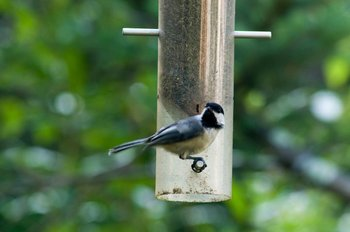 Bird at the feeder at Moondance Ridge Bed & Breakfast.