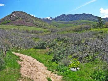 Scenic view at Summit Ridge Resort.