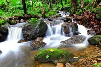 Creek near Black Bear Lodge.