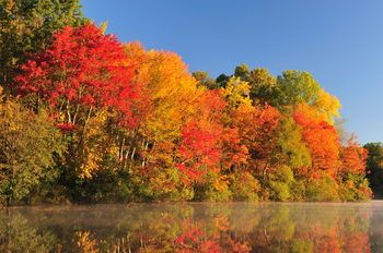 Fall foliage at Best Western White Mountain Inn.