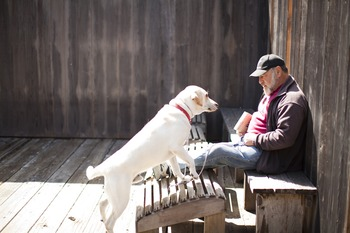 Pet Friendly Lodge at Sea Ranch Lodge
