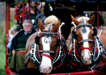 Horse-Drawn Carriage Rides at Thunder Bay Resort