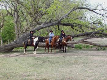 Horse Activities at Twin Elm Ranch