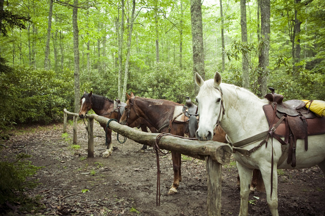 Horses at Cataloochee Ranch.