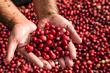 cranberry-fest